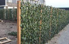 Natuurlijke schutting | heidematten | Tuinafscheiding.nl Garden Fence Panels, Garden Fencing, Natural Fence, Natural Garden, Eco Garden, Home And Garden, Vine Trellis, Backyard Plan, Garden Architecture