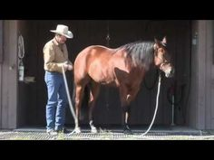 Parelli Natural Horse Training Tip - Approaching a horse in a corral - YouTube