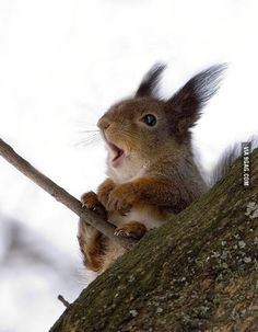 A squirrel on a windy day.