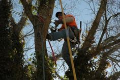 Clipping the Elm Tree. Photo by Nord Lange. Elm Tree, Newport, Vacation, Vacations, Holidays