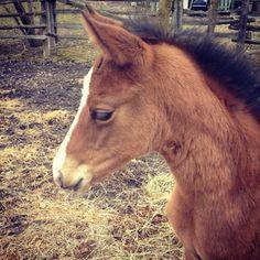 a baby horse named apple(jack). @Jill Barrett