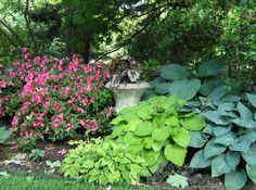 Garden Design 2013: Shade Garden Designs