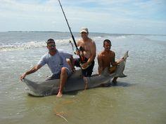 Google Image Result for http://georgiasharkfishing.com/wp-content/uploads/2008/09/imgp0760.JPG