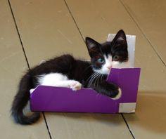 Kitty and box.