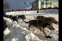 Photos: Iditarod 2016 ceremonial start kicks off the 44th race | Alaska Dispatch…