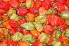 Are Habaneros Good for Your Health? | Healthy Eating | SF Gate