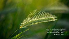 Scripture Desktop | Laced With Grace - Christian Devotions