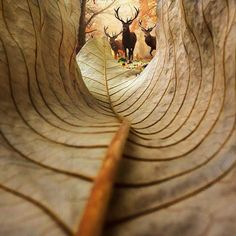 Deer from the perspective of the leaf. I like this photo because it is shot from… Deer from the perspective of the leaf. I like this photo because it is shot from a creative angle. I like the leading lines and shapes that are included in this photo. Creative Photography, Digital Photography, Amazing Photography, Nature Photography, Perspective Photography, Photography Women, Fashion Photography, Travel Photography, Shape Photography