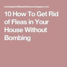 How To Get Rid Of Cat Fleas Without Chemicals
