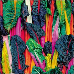 Five Color Silverbeet Swiss Chard. Every year, one of my favorite things to grow...so easy, beautiful, and versatile