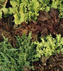 Organic Gourmet Blend Lettuce - 400 Seeds, 3g by Hirt's. $0.99. LETTUCE: Lettuce is a hardy, fast-growing annual vegetable with either loose or compact leaves. Leaf color ranges from light green through reddish brown. When it bolts, or goes to seed, the flower stalks are 2 to 3 feet tall, with small, yellowish flowers on the stalk. With so many types of lettuce to choose from, home gardeners will never become bored with this garden favorite. Lettuce - Gourmet ...