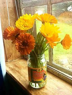 """""""I was shabby well before it was chic."""" -- Sarah Raven. Calendula officinalis (of the workshop), the European Marigold was used to color and flavor food, as well as medicinally. In the US marigolds refer to the species Tagetes and include the pungent so-called """"African"""" marigolds (Tagetes erecta) and """"French"""" marigolds (Tagetes patula) both native to Mexico and Central America."""