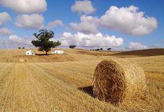 Localizada no Alentejo, a Herdade do Gizo é um condomínio privado com 52 grandes villas.