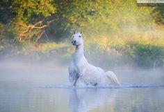 . Equus .
