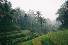 The Immersive Guide to Ubud Bali - Bon Traveler