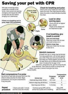 Pet CPR instructions