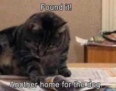 27 Funny Animal Memes And Pictures Of The Day