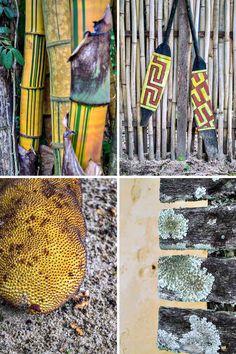 Details from Praia do Pouso on Ilha Grande, Brazil | heneedsfood.com