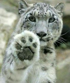 Look @ that large paw!