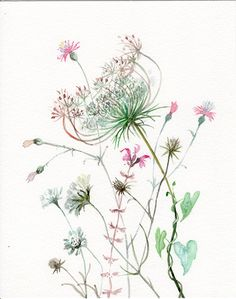 Wild Flowers WATERCOLOR original Queen by VerbruggeWatercolor