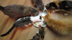 Adorable cats attempt to eat invisible tuna -- I might have posted this previously, but I couldn't resist doing it again.  It makes me laugh so much.