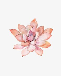 Succulent plants PNG and Clipart Free Watercolor Flowers, Floral Watercolor, Painting Collage, Watercolor Paintings, Illustration Cactus, Succulents Drawing, Flower Structure, Plant Wallpaper, Leaf Drawing