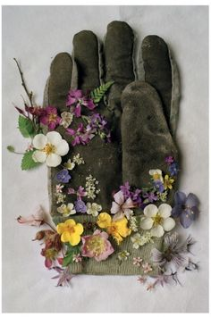 Tim Walker Photography - GARDENING GLOVE, NORTHUMBERLAND  ENGLAND, 2000