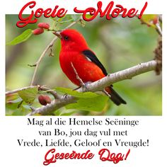 Good Morning Wishes, Day Wishes, Prayer Quotes, Wisdom Quotes, Beautiful Words, Beautiful Pictures, Afrikaanse Quotes, Goeie More, Morning Quotes