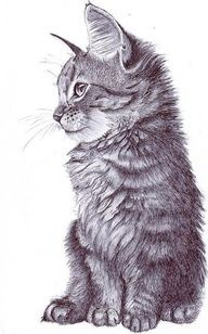 great drawing of a kitten.  Beautiful