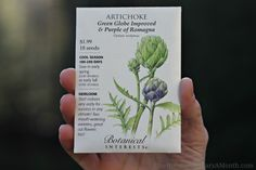 How to Grow Artichokes {Start to Finish} - One Hundred Dollars a Month
