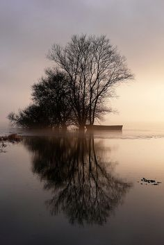 Lac de grand Lieu by minikti, via Flickr