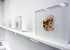 aki-inomata.com #crab