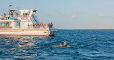 Day With the Dolphins - Nature Tours by boat explore Port Aransas' beauty Hiking Places, Hiking Spots, Port Aransas Texas, Only In Texas, Texas Coast, Texas Vacations, Rio Grande Valley, South Padre Island, South Texas