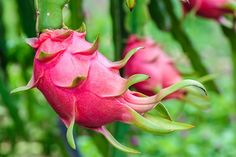 9 Amazing Benefits Of Dragon Fruit For Skin, Hair, And Health