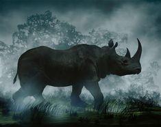 Rhino, beauty in motion