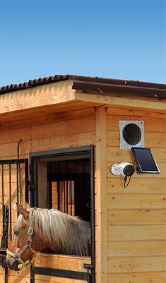 Überwachen in der Pferdebox. Kabellos und ohne direkte Stromversorgung. Reolink GO 4G Kamera inkl. Solarpanel | calitron.ch Horses, Cellular Network, Wi Fi, Horse
