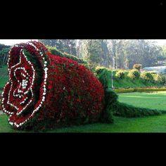 A rose to all my followers wishing you a great week ahead!  #flowers #garden #rose #home #homedecor #homedesign #decor #design #designoftheday #exteriors #ig #igdaily #ideas #interiors #interiordesign #picoftheday #pictureoftheday #photooftheday #instahub #instapic #instagood #instahome #instadaily #instadecor #instadesign #instagramer #instafollowers #instainteriors #follow #ideas... - Interior Design Ideas, Interior Decor and Designs, Home Design Inspiration, Room Design Ideas, Interior…