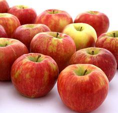 Honeycrisp apples -- a University of Minnesota creation. Simply the best apple in the world. Apple Online, Apple Farm, Apple Varieties, Honeycrisp Apples, Beautiful Fruits, University Of Minnesota, Fresh Apples, Tasty Bites, Apple Crisp