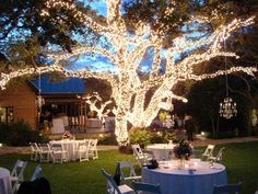 Christmas tree lights are an inexpensive and dramatic way to add sparkle and romantic magic to your backyard wedding!  Do be very careful that you don't overload electrical outlets or use more lights on a string than is recommended.  A power outage or fire is not a great way to celebrate your marriage!!!