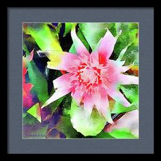 Wild Framed Print featuring the painting Bromeliad by Michele Ross