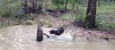 Chi non immagina un viaggio in Australia durante il quale trovarsi attorniato da canguri? Magari per scattare una foto   http://tuttacronaca.wordpress.com/2013/08/30/il-video-del-canguro-che-tenta-di-annegare-un-cane/