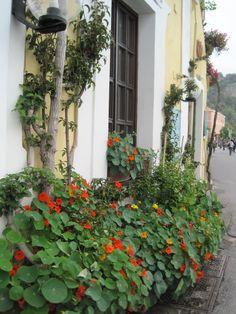 Monterosso Al Mare Doorway
