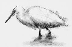 Artist Sean Briggs producing a sketch a day Egret  #art #drawing #egret #http://etsy.me/1rARc0J #sketch
