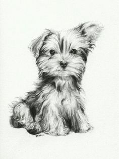 Facts On The Affectionate Yorkie Dog Temperament Animal Sketches, Animal Drawings, Pencil Drawings, Art Sketches, Art Drawings, Yorshire Terrier, Puppy Drawing, Desenho Tattoo, Dog Paintings