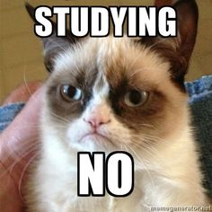 Awww, cheer up grumpy cat! You can get through it! #studystrong