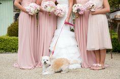 IMG_0979 copy Bridesmaid Dresses, Wedding Dresses, Real Weddings, Crowd, Wedding Photography, Fashion, Bridesmade Dresses, Bride Dresses, Moda