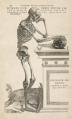 "Andreas Vesalius Human Anatomy Print : ""Skeleton Contemplating a Skull"" (Fabrica, 1543) - Giclee Fine Art Reproduction Renfield's Garden"