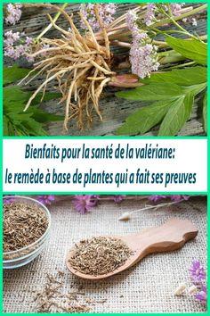 10 Bienfaits pour la santé de la valériane: le remède à base de plantes qui a fait ses preuves