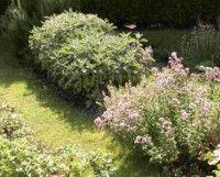 Domáca lekáreň na záhrade