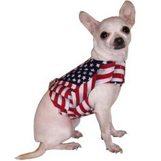4th of july puppy clothes